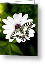 Swallowtail Butterfly Resting Greeting Card