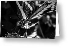 Swallowtail On Lantana Greeting Card