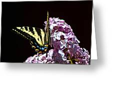 Swallowtail On Lilac 3 Greeting Card