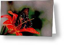 Swallowtail On Orange Greeting Card