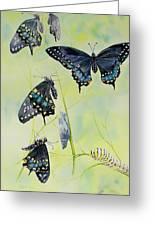 Swallowtail Story Greeting Card