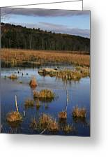 Swamp 1 Greeting Card