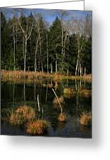 Swamp 2 Greeting Card