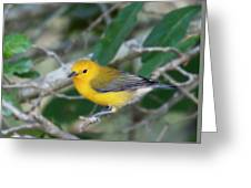 Swamp Canary Greeting Card