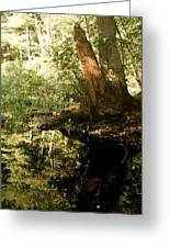 swamp hyde park MA Greeting Card