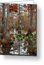 Swamp In Fall Greeting Card