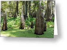 Swamp Knees Greeting Card