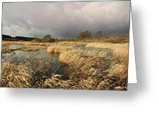 Swampland Greeting Card by Robert Lacy