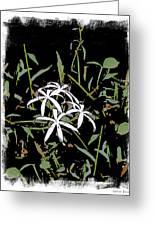 Swamplilies Greeting Card