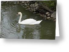Swan Along The Shoreline Greeting Card by Corinne Elizabeth Cowherd