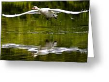 Swan Ascent Greeting Card