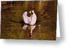 Swan At Susan Lake Greeting Card