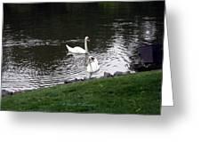 Swan Couple Greeting Card