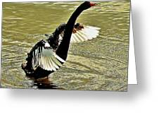Swan Dance Greeting Card