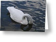 Swan Dining Greeting Card