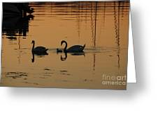 Swan Family At Sunset Greeting Card by Camilla Brattemark