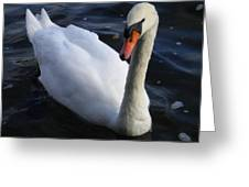 Swan Flying In The Water  Denmark Greeting Card