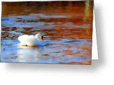 Swan Gold And Blue Greeting Card
