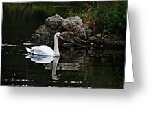 Swan I Greeting Card