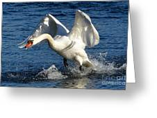 Swan In Action Greeting Card