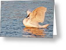 Swan In Golden Light Greeting Card