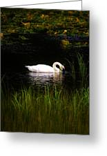 Swan In September Greeting Card