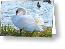 Swan In Sunlight Greeting Card