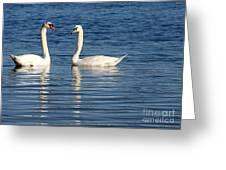 Swan Mates Greeting Card by Sabrina L Ryan
