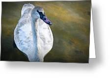 Swan On Evergreen Lake Greeting Card