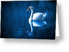 Swan On Lake Greeting Card