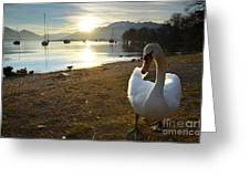 Swan On The Beach Greeting Card