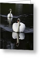 Swan Pair 2 Greeting Card