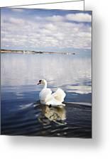 Swan Song Greeting Card by Vicki Jauron