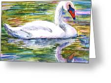 Swan Summer Greeting Card