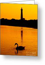 Swan Sunset At The Light Greeting Card
