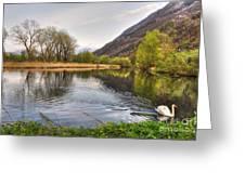 Swan Swimming On A Lake Greeting Card