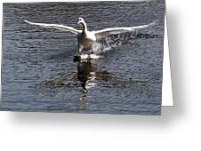 Swan Touches Down Greeting Card