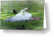 Swans In Nest Greeting Card