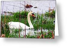 Swan's Marsh Greeting Card