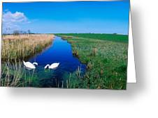 Swans On Bog, Near Newcastle, Co Greeting Card