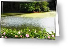 Swans On Pond And Hibiscus With Oil Painting Effect Greeting Card