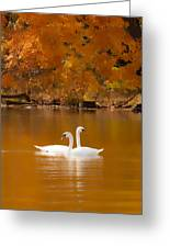 Swans Soft And Smooth Greeting Card