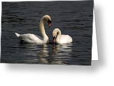Swans Swimming Greeting Card