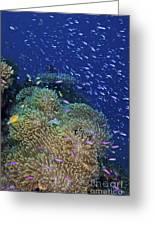 Swarms Of Small Baitfish Swim Greeting Card