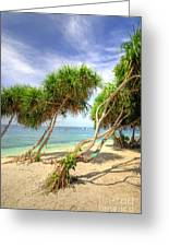Swaying Palm Trees Greeting Card