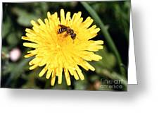 Sweat Bee Greeting Card by Science Source