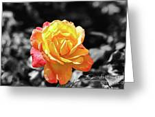 Sweet Aroma Greeting Card