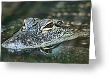 Sweet Baby Alligator Greeting Card