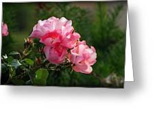 Sweet Blossom Mini Roses Greeting Card