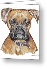 Sweet Boxer Greeting Card by Marla Saville